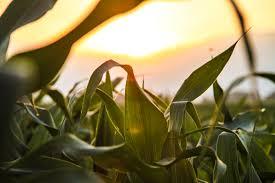 राष्ट्रीय किसान दिवस पर शायरी - National Farmers Day Shayari in Hindi